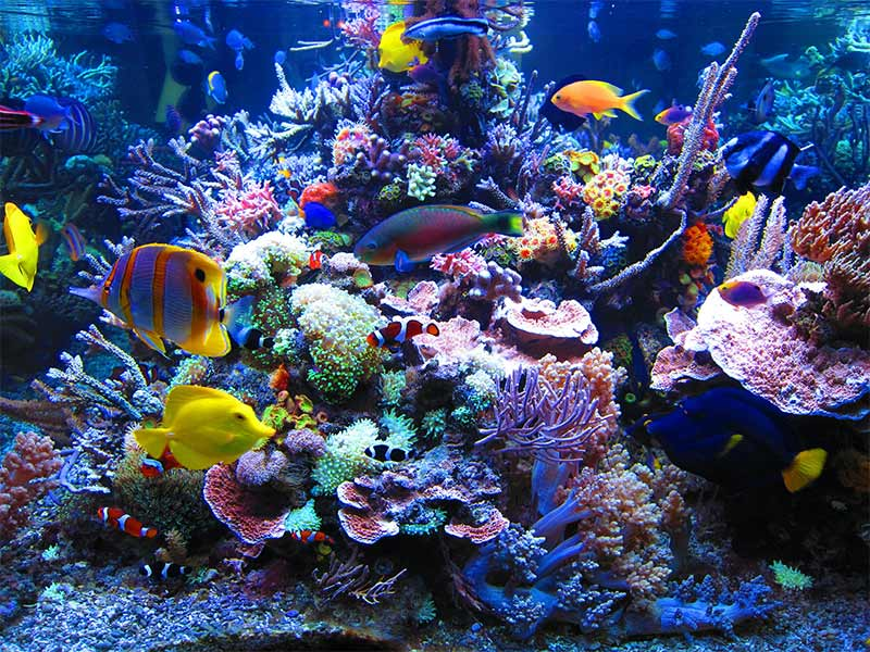 reef safe fish and invertebrates