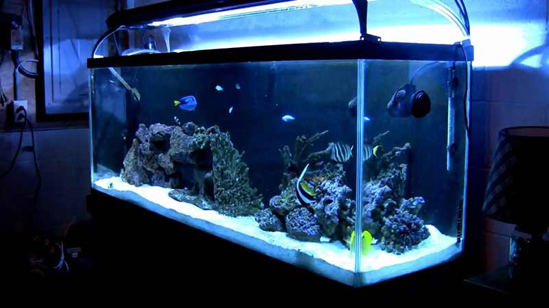 complete saltwater aquarium kit