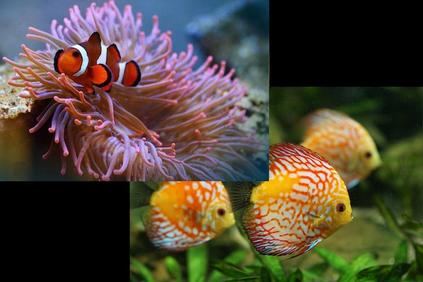 Saltwater-vs-Freshwater-Aquarium-for-Beginners