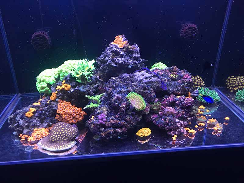 bare bottom reef tank