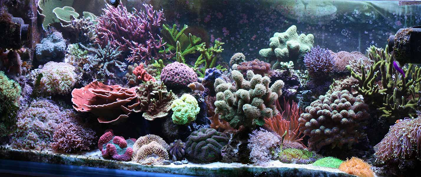 reef tank aquascaping