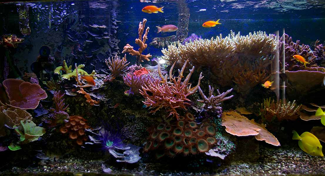 how many fish per gallon saltwater