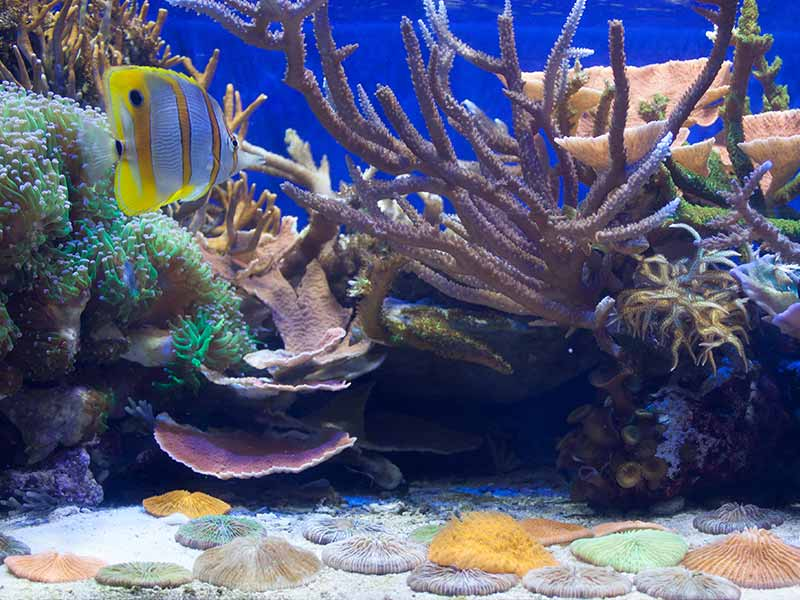 how to lower nitrates in reef tank