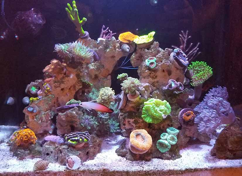 nano reef tank for beginners