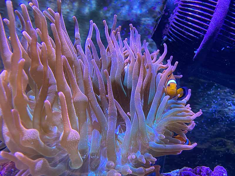 how to raise and lower ph in a saltwater aquarium